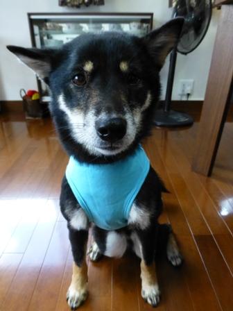 盲導犬サポートSHOP30