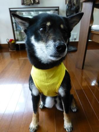盲導犬サポートSHOP36