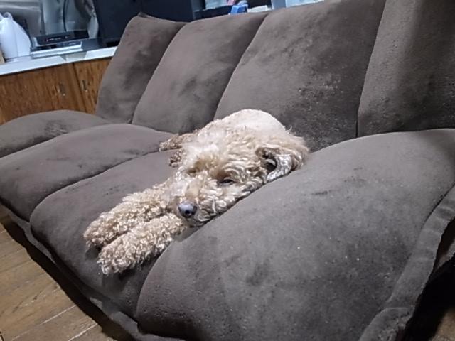 ソファーにて1