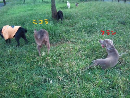 DSC_0119-2011-9-14.jpg
