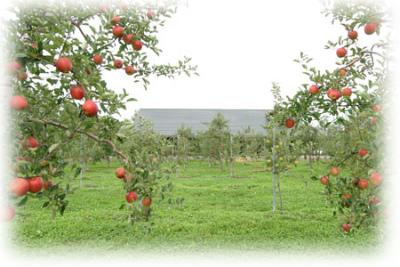 リンゴの森 三谷果樹園