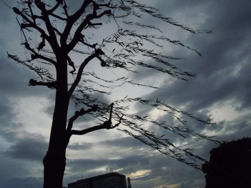 20110825_4.jpg