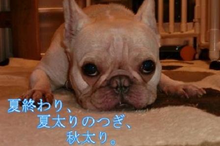 ナンバー50 ゴン太郎君