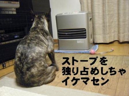 ナンバー59 心桜ちゃん3