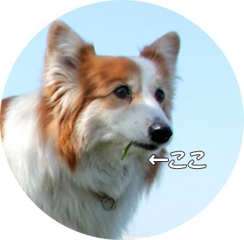 20120414_23.jpg