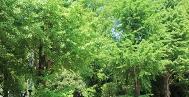 滝野川green