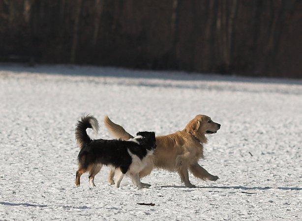 Hundewiese4.jpg