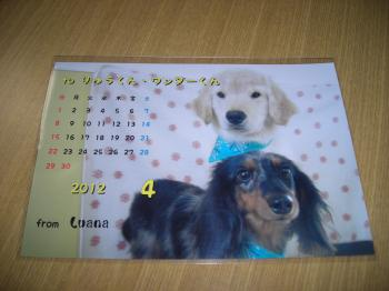 DSCN2873_convert_20120330194046.jpg