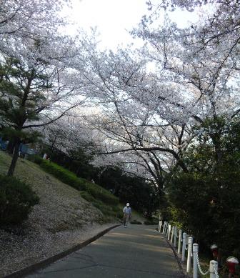桜並木でマラソン