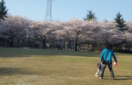 桜の木の下ではお弁当を食べている人たちが・・・