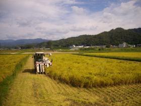 田中農場稲刈②