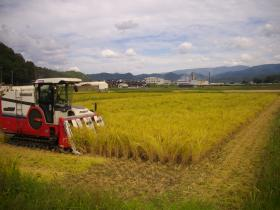 田中農場稲刈①