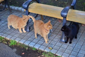 Cats at Breakfast Time
