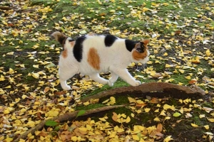 Sakura-chan The Cat in Autumn