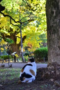 Sakura-chan The Cat from Behind