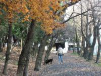 パパと散歩