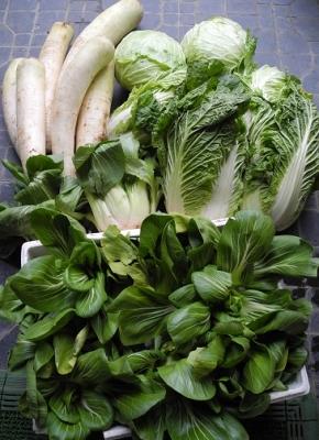 20131128バイオ飼料の野菜