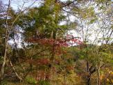 2011101712.jpg