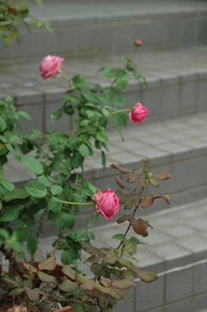 auguste_renoir2011929-2.jpg