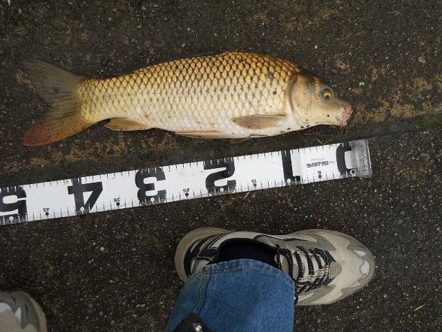 2012 3.18  鯉釣り 005