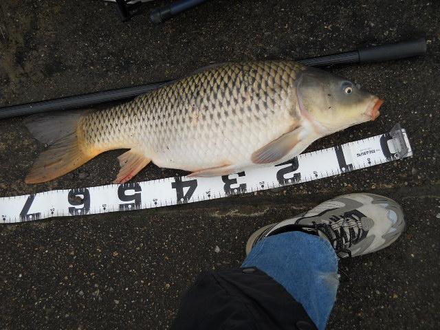2012 3.18  鯉釣り 003