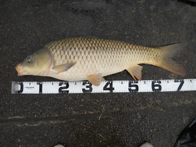 2012 3.24  鯉釣り 006