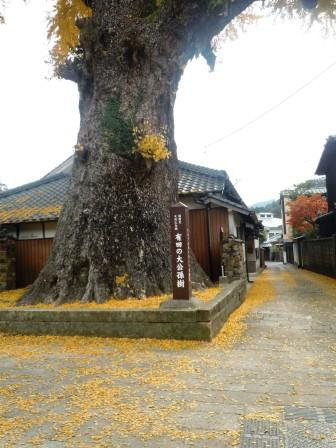 泉山大公孫樹5(2013-11-27)