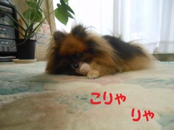 ブログ用 006
