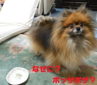 ブログ用 052