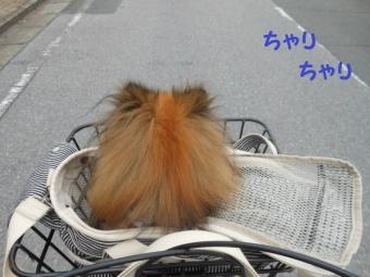 水元公園その1 (1)