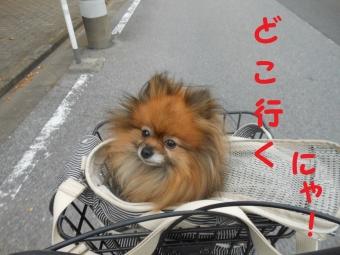 水元公園その1 (2)