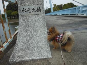 水元公園その1 (3)