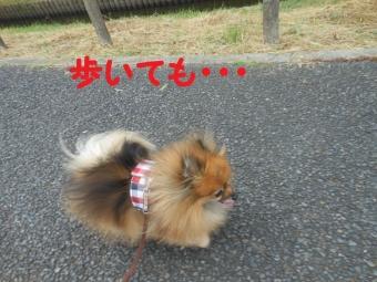 水元公園その1 (4)