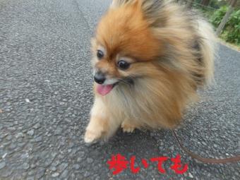 水元公園その1 (5)