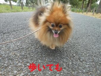 水元公園その1 (6)