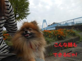 水元公園その1 (7)