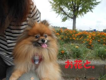 水元公園その1 (8)