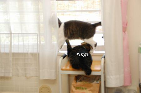 20110817kotetsumiikun2.jpg