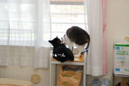 20110817kotetsumiikun3.jpg