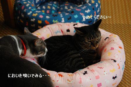 20110830kotetsumiikun2.jpg