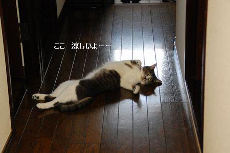 20110830miikun.jpg