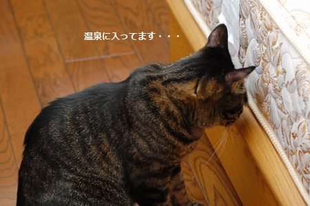 20120216kotetsu3.jpg