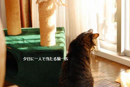 20120218kotetsu.jpg