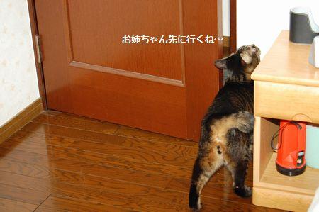 20120304kotetsu2.jpg