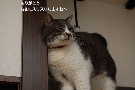 20120311miikun10.jpg