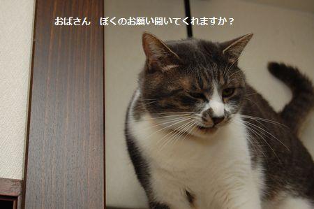 20120311miikun9.jpg