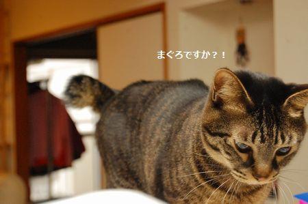 20120322kotetsu.jpg