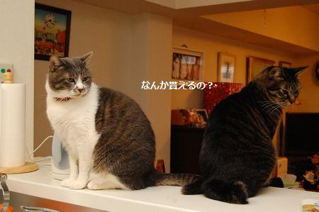 20120322kotetsumiikun.jpg