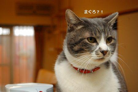 20120322miikun.jpg
