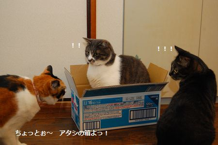 20120329mikankotetsumiikun.jpg